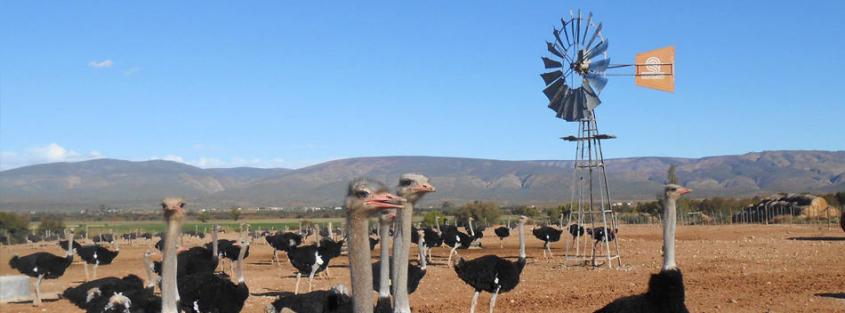 Oudtshoorn in die Klein Karoo vorm deel van die GR&KK area.