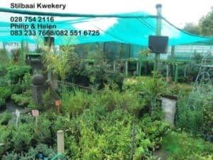 Stilbaai Kwekery / Stilbaai Nursery