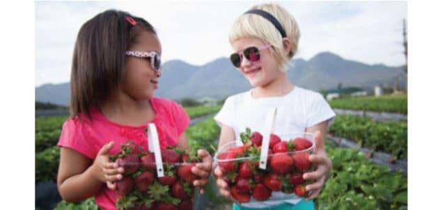 Redberry Farm George