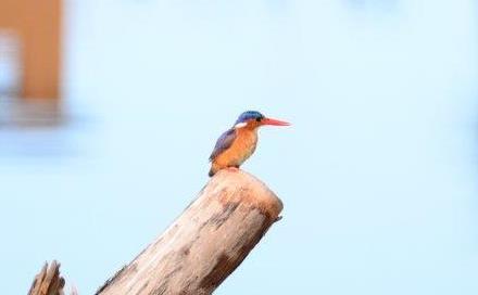 Botterkloof Resort Bird watching and Fishing