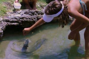 Feeding of the Eels