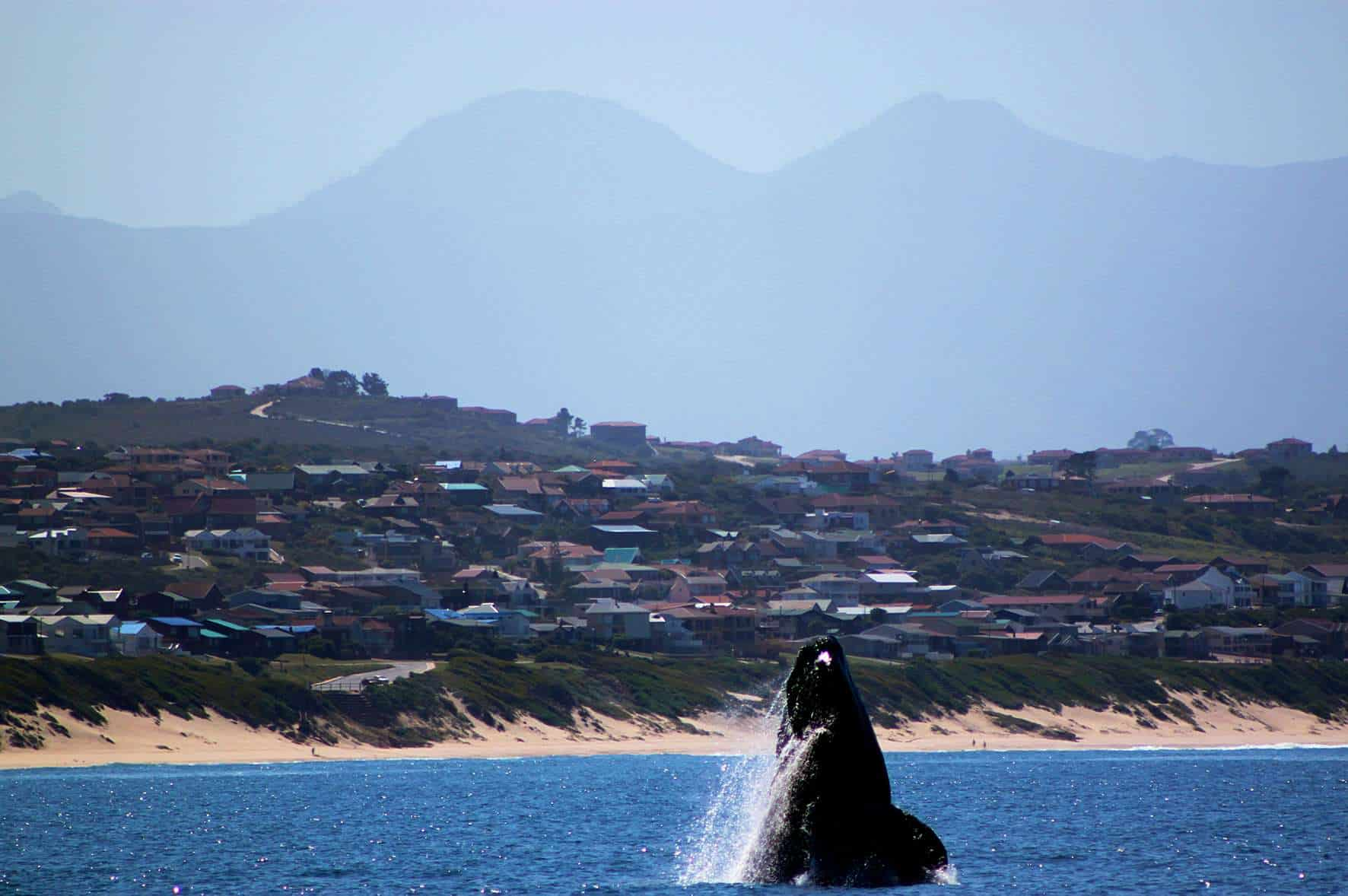 Mossel Bay Whale Watching