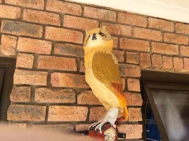 The Owl House Stilbaai